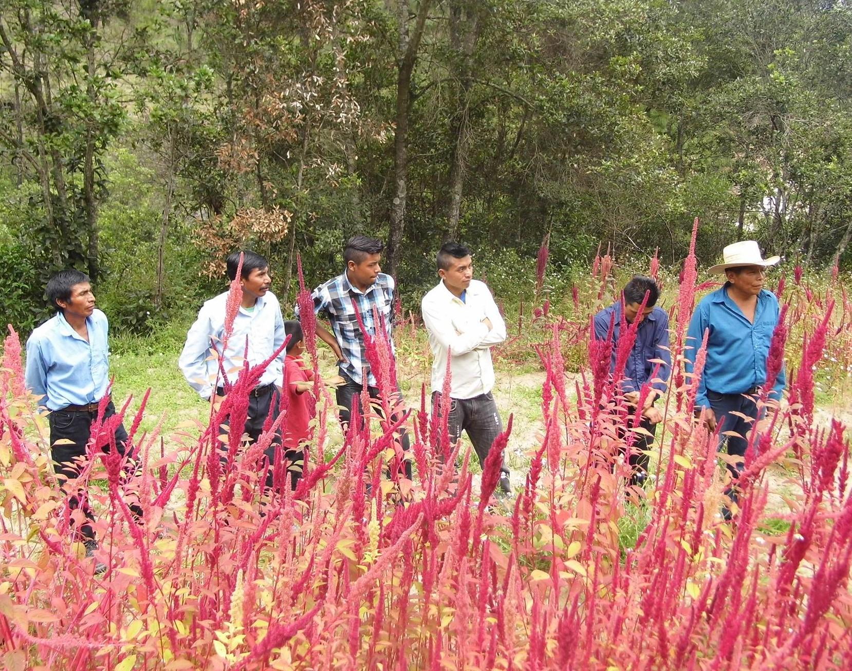 Markafgrøden Amarant Building Community - Guatemala