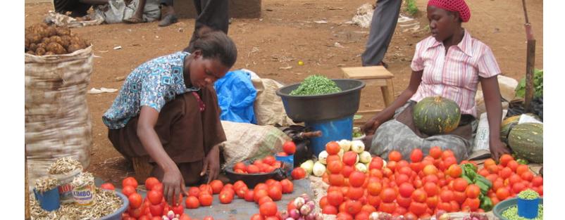 Maple microdevelopment established in Uganda 2008